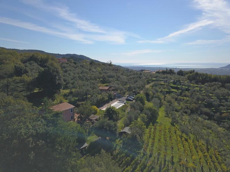 Villa con vigneti e oliveti