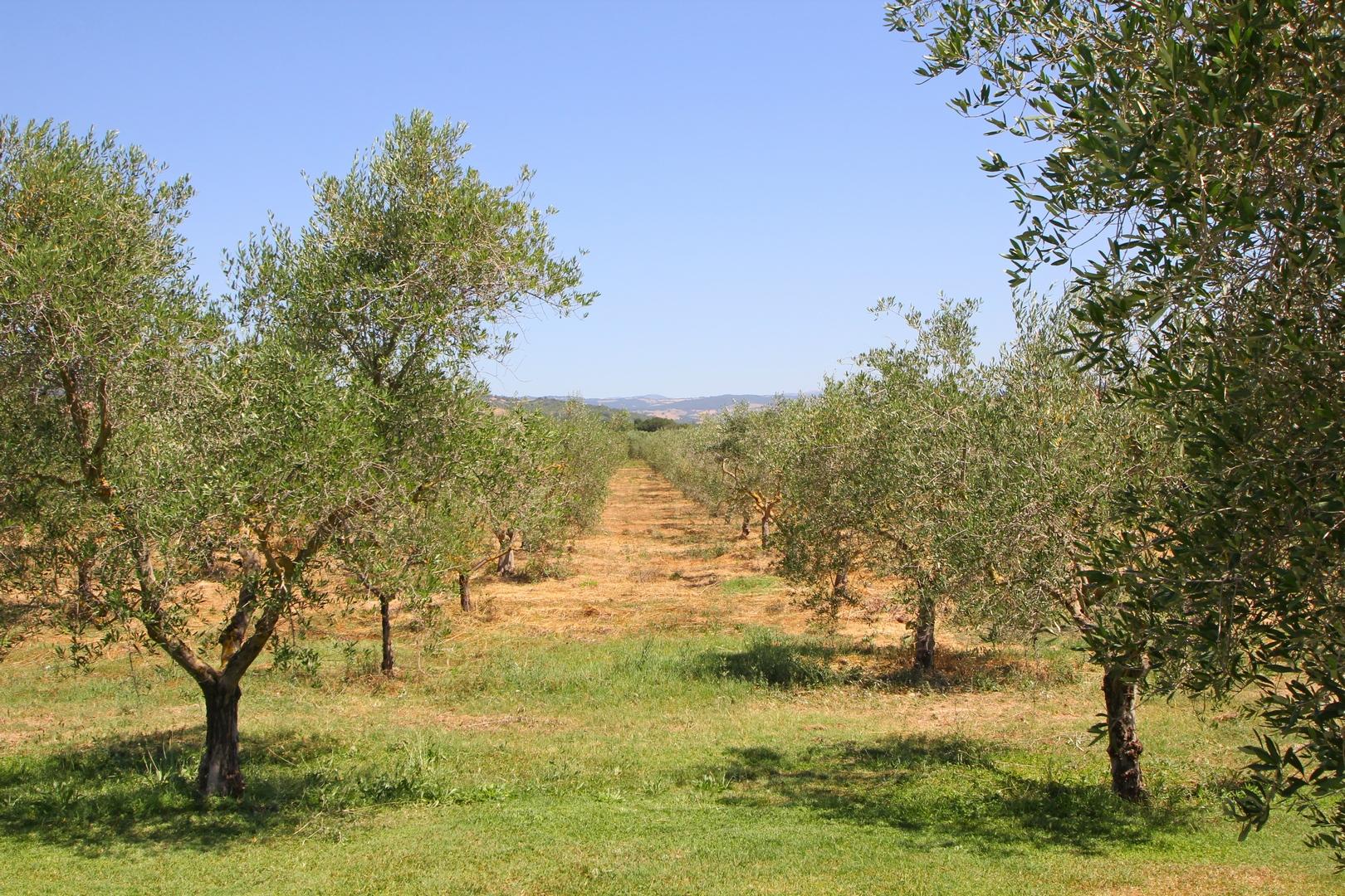 Agriturismo Scansano
